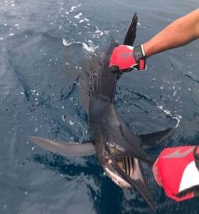 Fishing-Report-July14-27-Edited-Pix-2