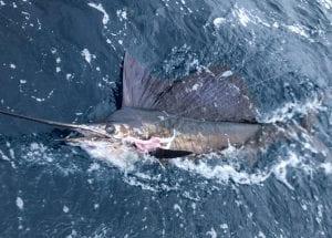 Fishing-Report-July14-27-Edited-Pix-35