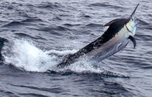 Fishing-Report-July14-27-Edited-Pix-44
